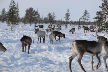 Laponie escapades_balades blog